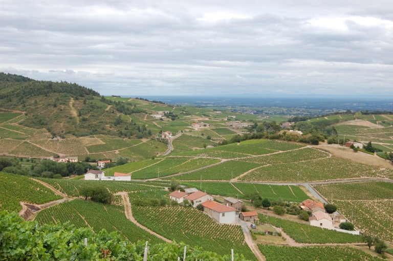 View_from_Chiroubles_Cru_Beaujolais