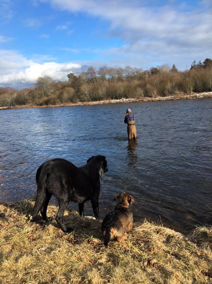 Salmon Fishing on the River Dee (& OrganicWine)